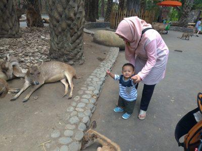Hewan-hewan yang bebas berkeliaran di Bali Zoo