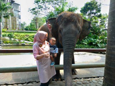 Hewan Favorit Si Kecil Selain Kucing ya Gajah